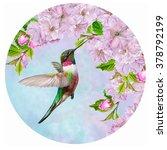 Little Bird Hummingbird On The...