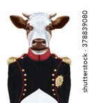 Portrait Of Cow In Military...
