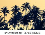 Silhouettes Of Palm Trees At...