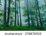 beautiful foggy forest scene in ... | Shutterstock . vector #378878503