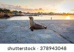 Sea Lion Near The Beach In San...