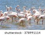 flamingo in the ocean | Shutterstock . vector #378991114