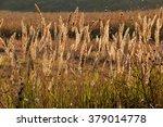 grasses   wild grass | Shutterstock . vector #379014778