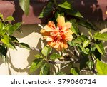 showy orange suffused with pink ... | Shutterstock . vector #379060714