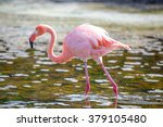 greater flamingo  galapagos... | Shutterstock . vector #379105480