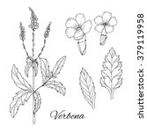 Set Of Medicinal Herbs. Inky...