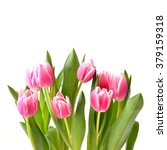 Tulips  Bouquet Isolated On...