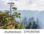green tree growing on top of...   Shutterstock . vector #379190704
