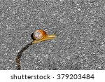 One Lonely Snail Crawling...