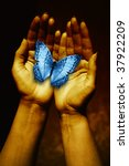 open female hands holding a blue butterfly - stock photo