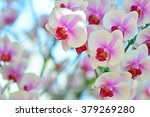 white and pink phalaenopsis... | Shutterstock . vector #379269280