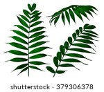 fern set. vector illustration | Shutterstock .eps vector #379306378