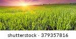 spring warm air the sun warms...   Shutterstock . vector #379357816