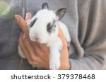 bunny in woman hands | Shutterstock . vector #379378468