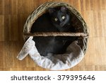 Stock photo black cat lying in a wicker basket 379395646