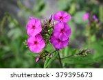 phlox | Shutterstock . vector #379395673