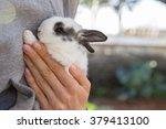 Rabbit Bunny In Hands