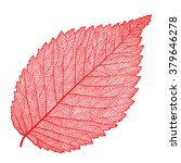vector skeletonized leaf on a... | Shutterstock .eps vector #379646278