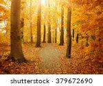Orange And Yellow Fall Trees...