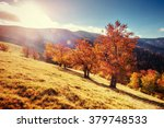 forest road in the autumn.... | Shutterstock . vector #379748533