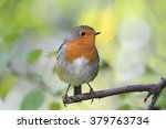 red bird robin sitting on tree... | Shutterstock . vector #379763734