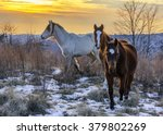 Wild Horses  Kentucky  Winter