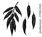 set of plant pictograms  willow ...