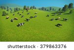 Herd Of Cows Graze On The Open...