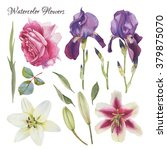 flowers set of hand drawn... | Shutterstock . vector #379875070