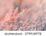 flowers grass blurred bokeh...   Shutterstock . vector #379918978