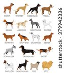 Dogs Breed Set. Vector Flat...