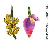 Yellow Banana Fruit And Purple...