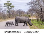 southern white rhinoceros in... | Shutterstock . vector #380099254