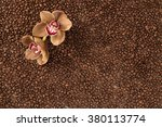 Small photo of Two mocha colored orchids laying in a bed of coffee beans. The beans are slightly softer focused to allow for easier text to overlay for copy space.