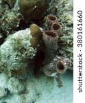 Small photo of Fish hiding under a rock beside tubular coral off the coast of Ambergris Key, Belize