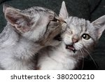 Stock photo two cats in a fist fight 380200210