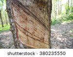 Rubber Plantation  South Of...