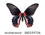 Beautiful Colorful Butterfly...