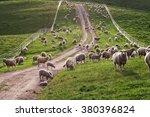 australian sheep and lambs back ... | Shutterstock . vector #380396824