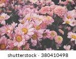 Stock photo pink flower 380410498