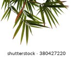 Bamboo Green Leaves Nature Of...