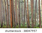 Fog among the  trees of the forest - stock photo