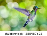 beautiful hummingbird with... | Shutterstock . vector #380487628