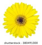 yellow gerbera flower isolated... | Shutterstock . vector #380491300