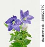 bellflowers | Shutterstock . vector #380527570