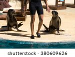 Shows Sea Lions In The Pool ...