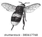 Bumblebee  Vintage Engraved...