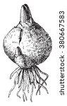 Bulb  Vintage Engraved...