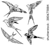 set doodle silhouettes swallows | Shutterstock .eps vector #380675884