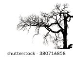Branch Of Leafless Tree...